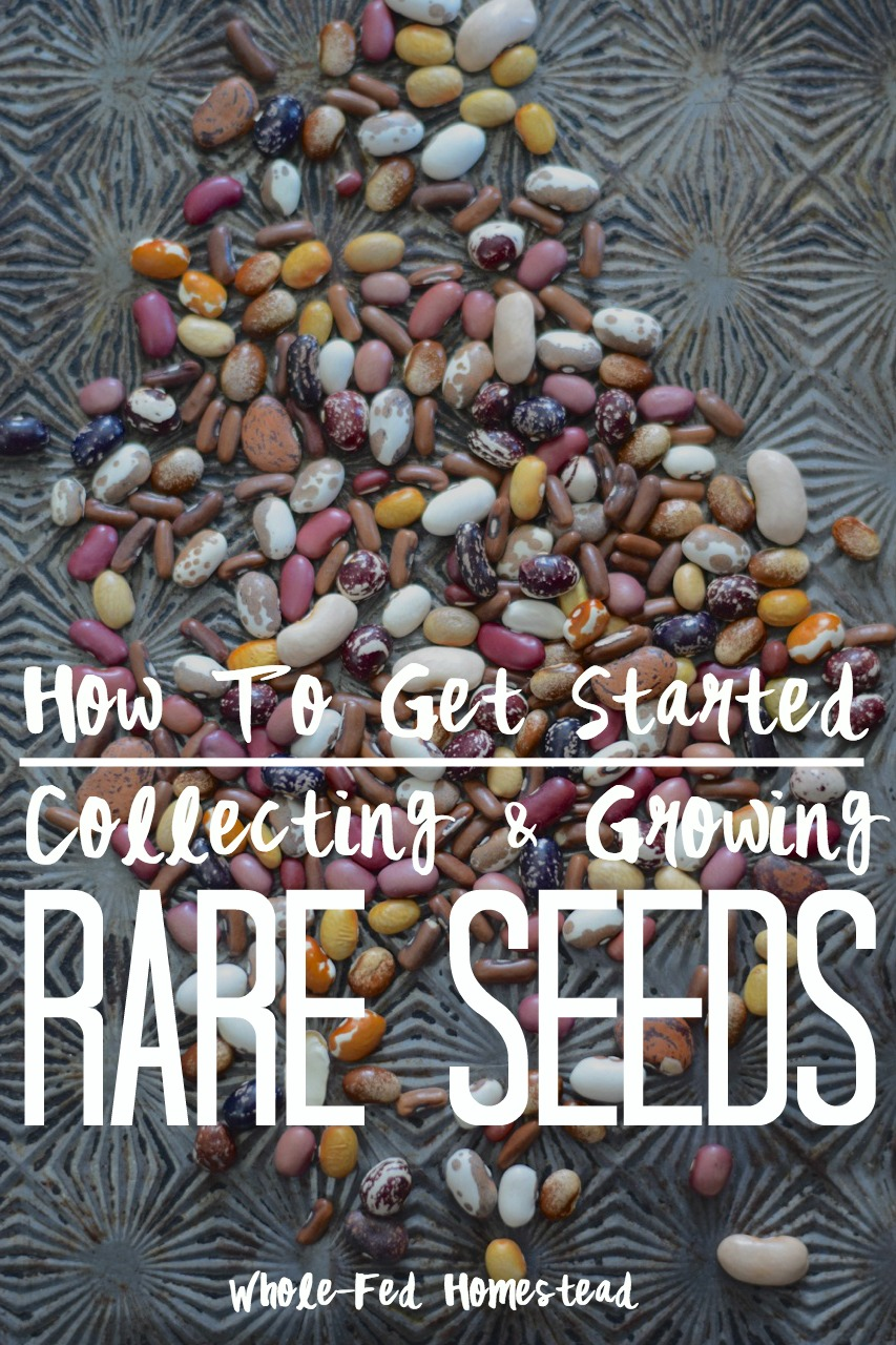 How to Get Started Collecting & Growing Rare Seeds