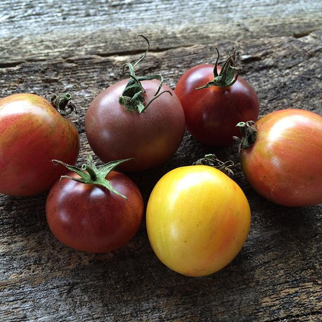 colorful heirloom tomatoes, How to Get Started Collecting & Growing Rare and Heirloom Seeds - How to Grow Rare Seeds | Whole-Fed Homestead