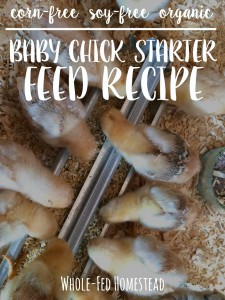 Homemade Organic Baby Chick Starter Feed Recipe {corn-free and soy-free}