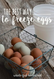 The BEST Way to Freeze Eggs!
