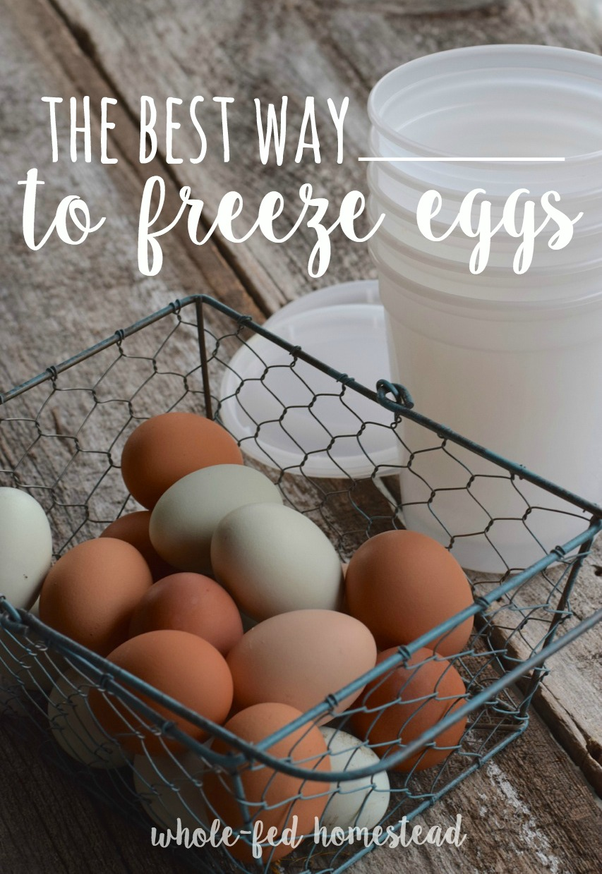 The BEST way to freeze eggs! How to freeze eggs without anything added- no sugar, no salt, nothing. Learn my favorite method HERE! Whole-Fed Homestead