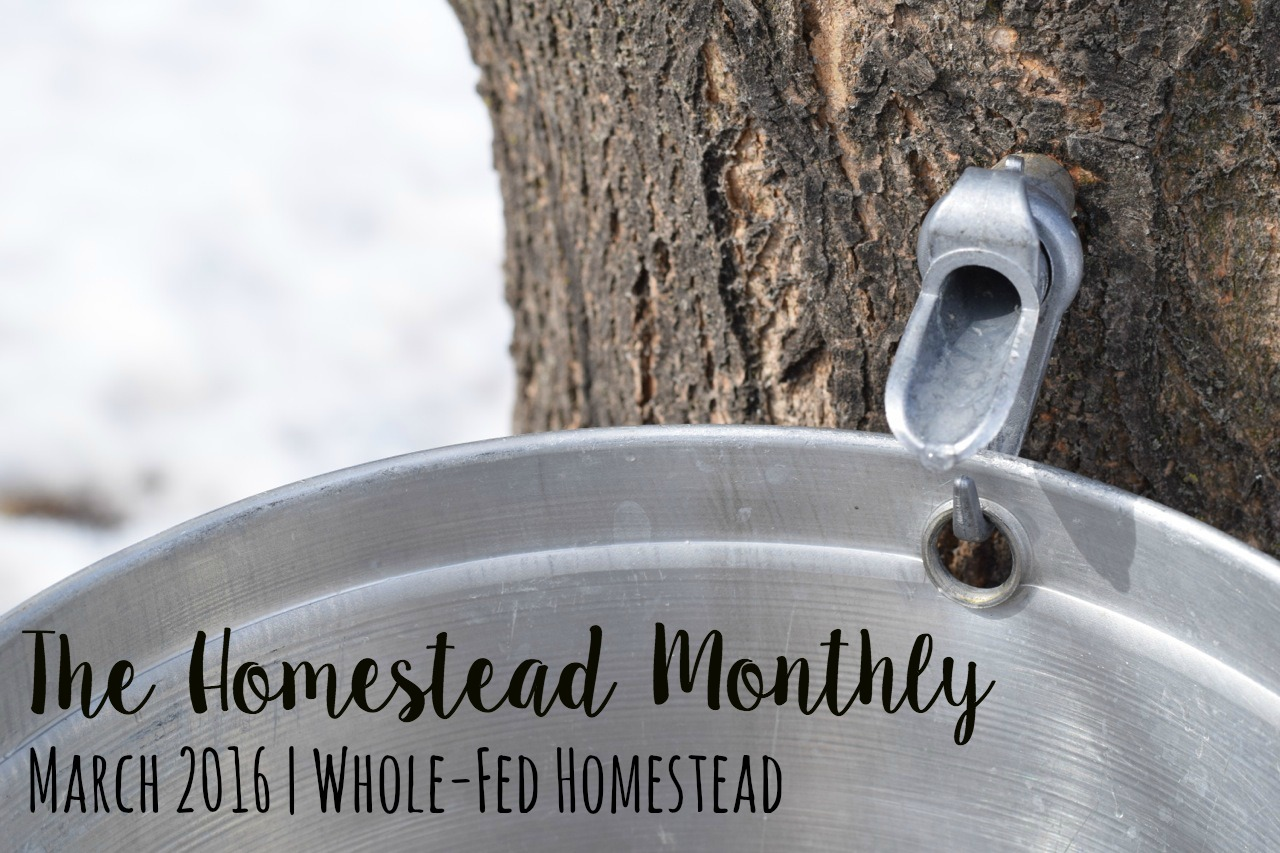 Homestead Monthly: March 2016 {maple update, kitchen finale, and planting all the things}
