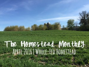 Homestead Monthly April 2016 {honey bee update, seed starting, and a new family member}