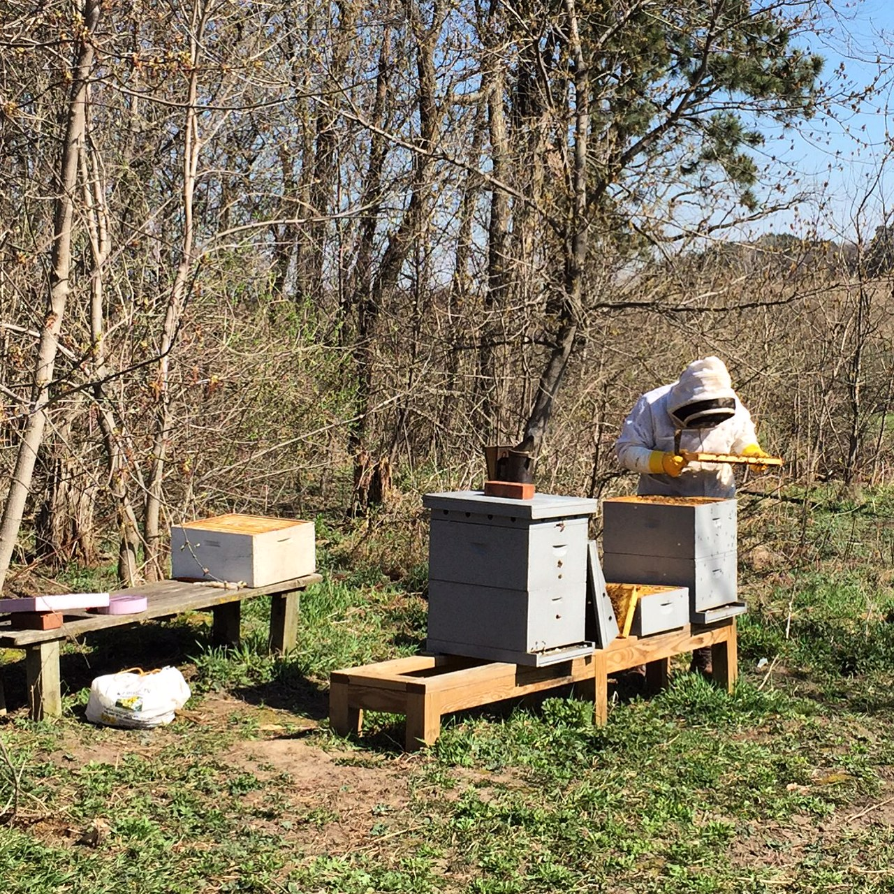 beehive first inspection in spring; Homestead monthly April 2016 | Homestead Monthly April 2016 {honey bee update, seed starting, and a new family member} | Whole-Fed Homestead