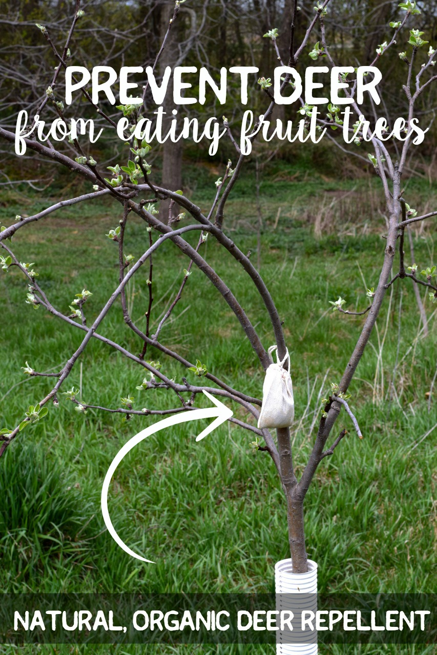 Natural organic deer repellent fruit trees