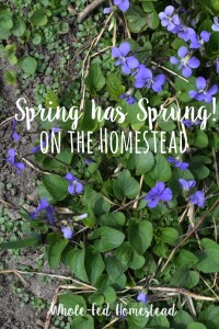 Spring has Sprung on the Homestead!
