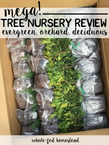 MEGA Tree Nursery Review: Online & Local, Evergreen, Orchard & Decidous