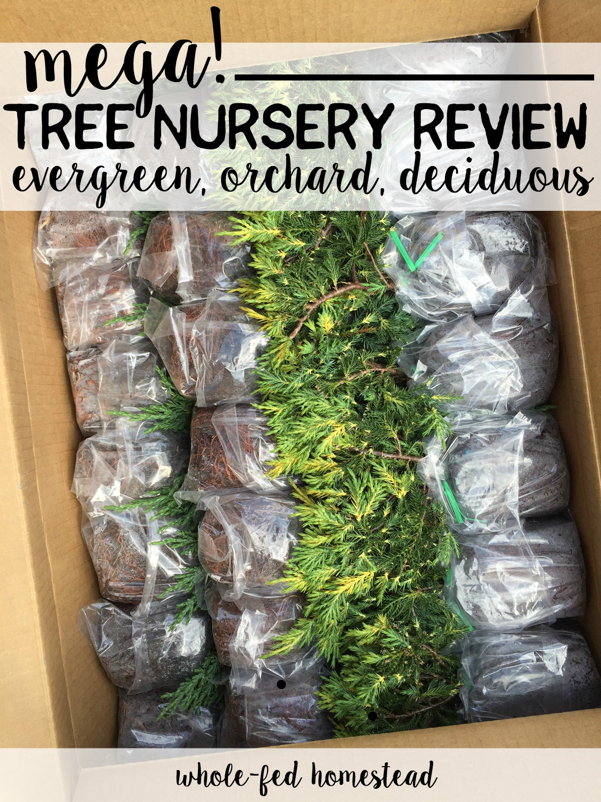 Mega Orchard Review Fi In This Tree Nursery