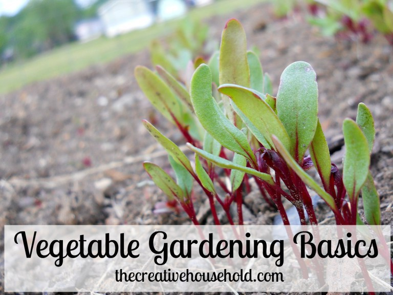 Vegetable-Gardening-Basics