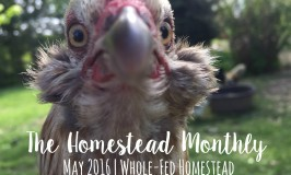 The Homestead Monthly May 2016