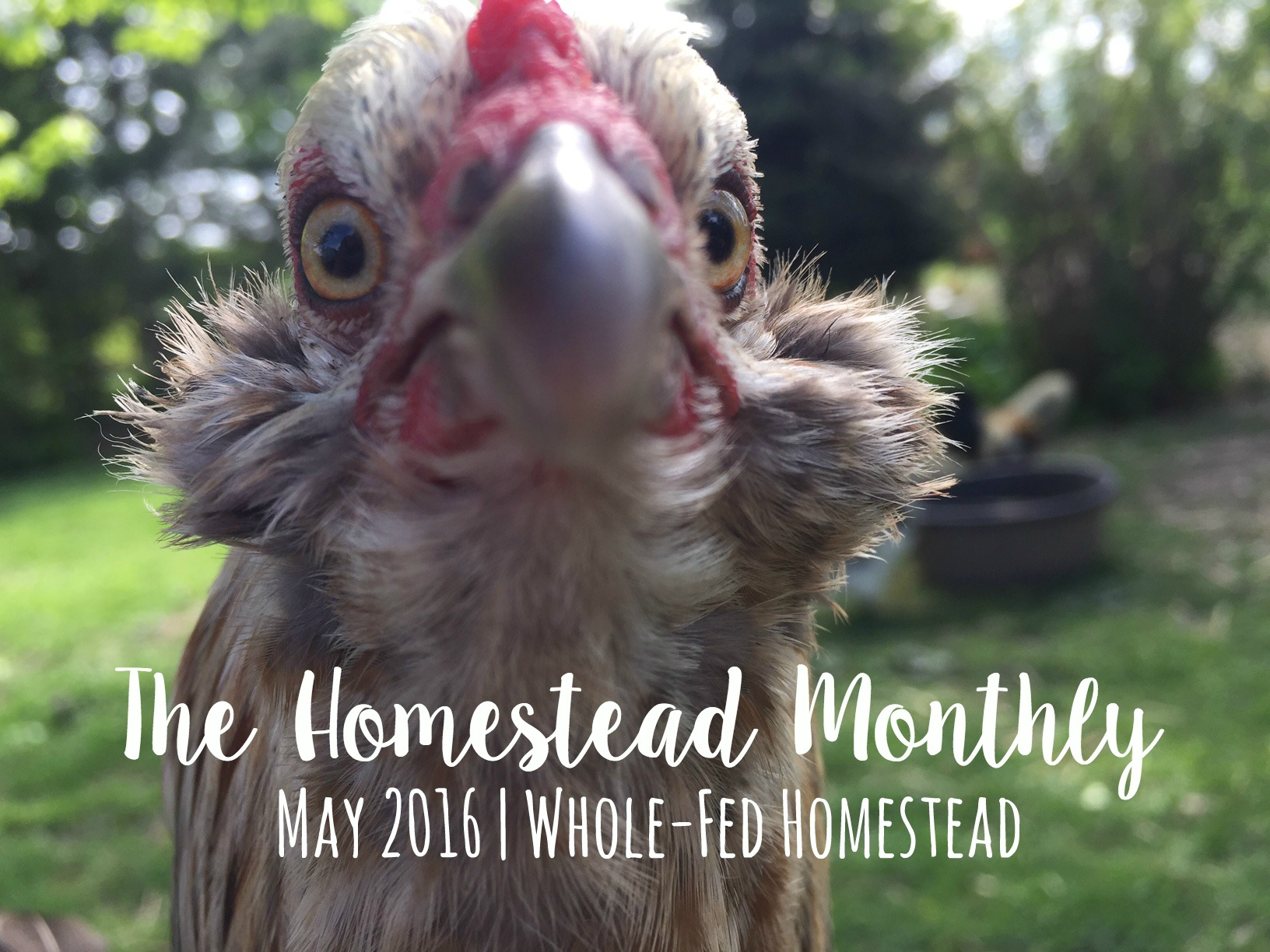 Homestead Monthly: May 2016 {mushroom growing, bee swarms, and homestead loss}