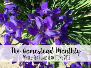 Homestead Monthly: June 2016 {garden boxes, blight-control, and babies}