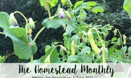 Homestead Monthly July 2016