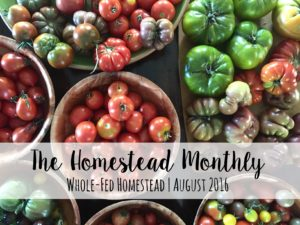 Homestead Monthly: August 2016 {heirloom veggies, abandoned chicks, and monarchs}