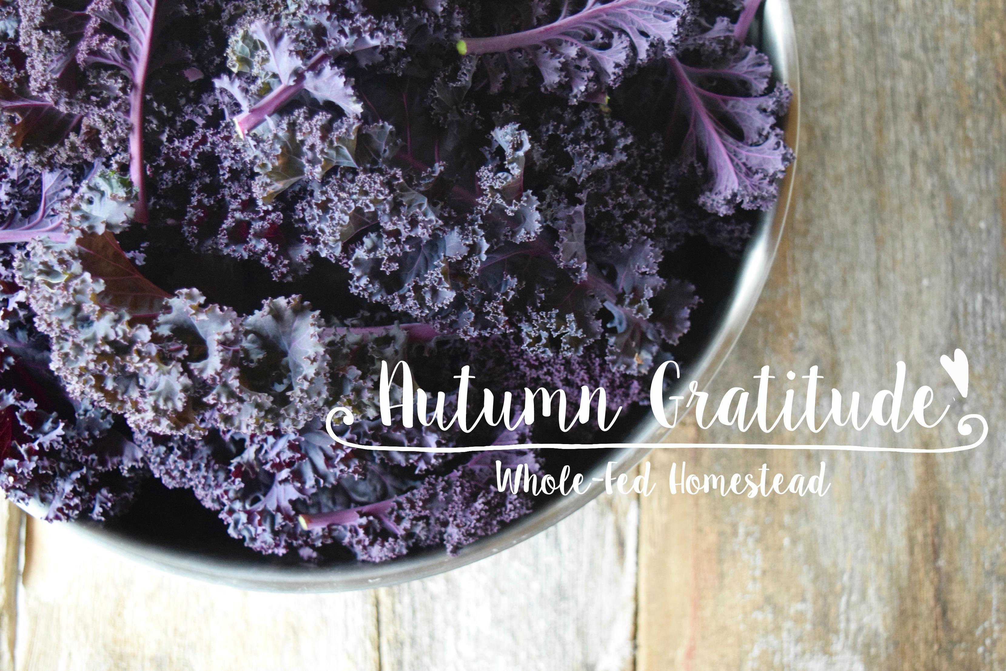 Autumn Gratitude