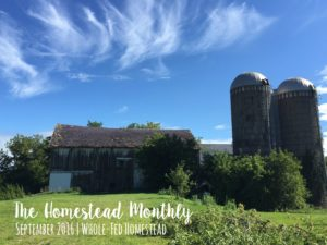 Homestead Monthly: September 2016 {purple veggies, mushroom hunting, and canning}