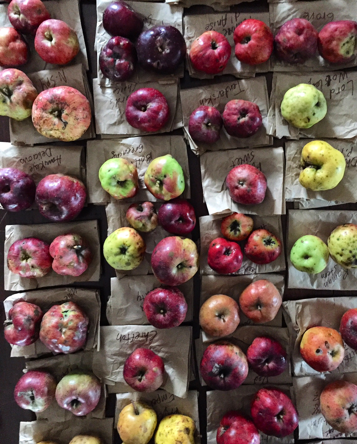 Rare heirloom antique apple varieties, Homestead Monthly: October 2016 {shiitakes, rare apples, and an unfortunate honey harvest} | Whole-Fed Homestead