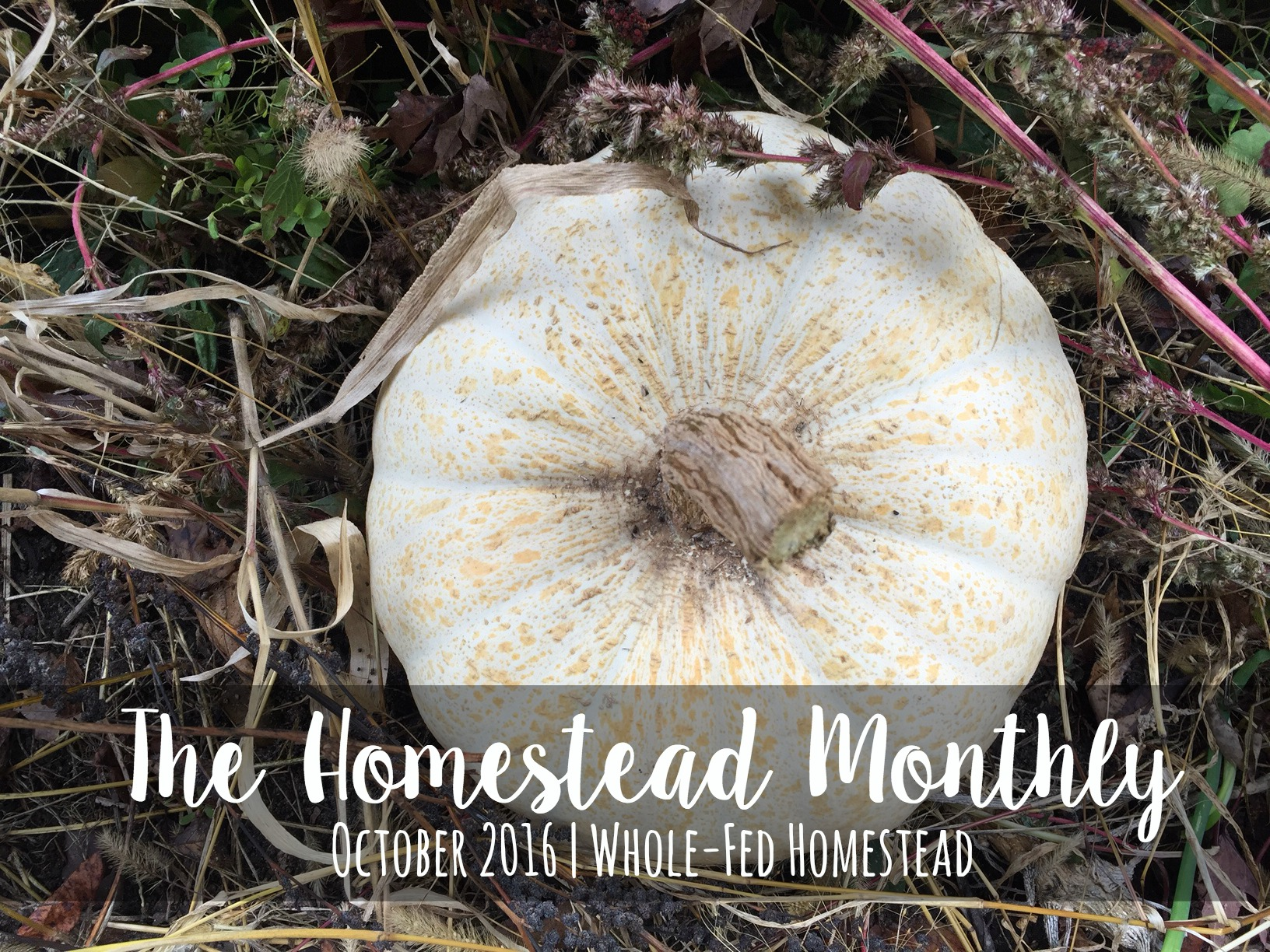 Austrian King's Bread Squash, Homestead Monthly: October 2016 {shiitakes, rare apples, and an unfortunate honey harvest} | Whole-Fed Homestead