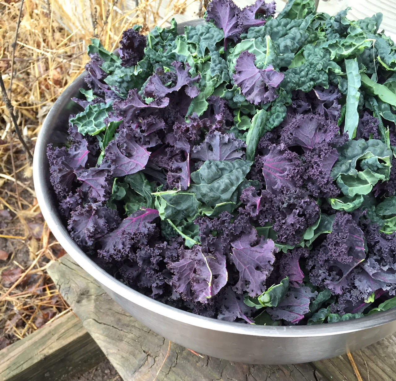 scarlet kale, Homestead Monthly: November {barn demolition, butchering, and winter preparations} | Whole-Fed Homestead
