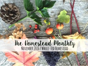 Homestead Monthly: November {barn demolition, butchering, and winter preparations}