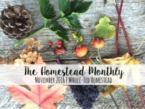 Homestead Monthly: November {barn demolition, butchering, and winter preparations}