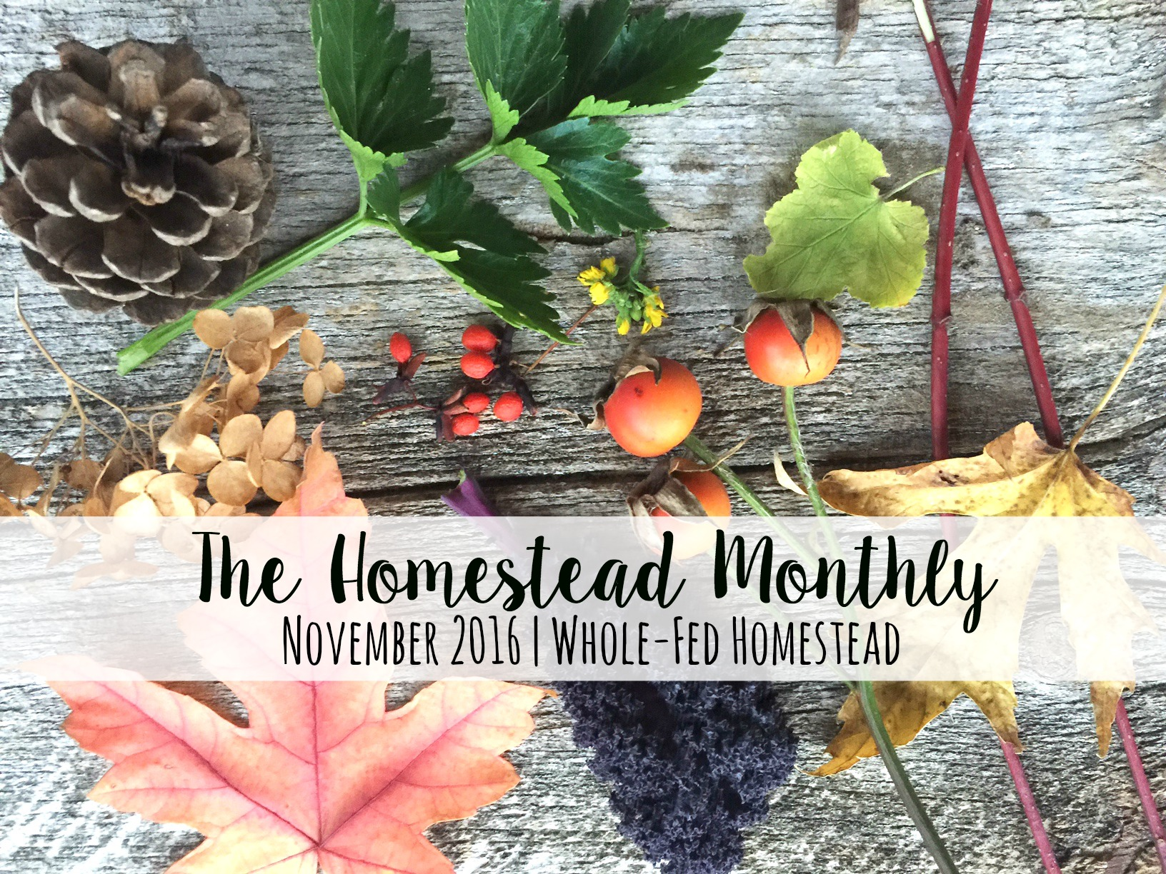 homestead-monthly-november-2016, Homestead Monthly: November {barn demolition, butchering, and winter preparations} | Whole-Fed Homestead
