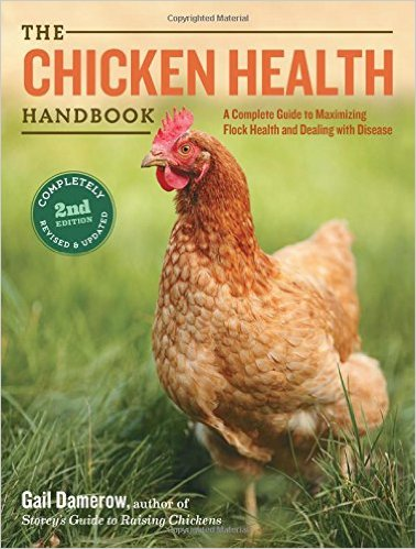 chicken-health, How to Decide when to Cull a Chicken {The Story of Little Henny} Whole-Fed Homestead