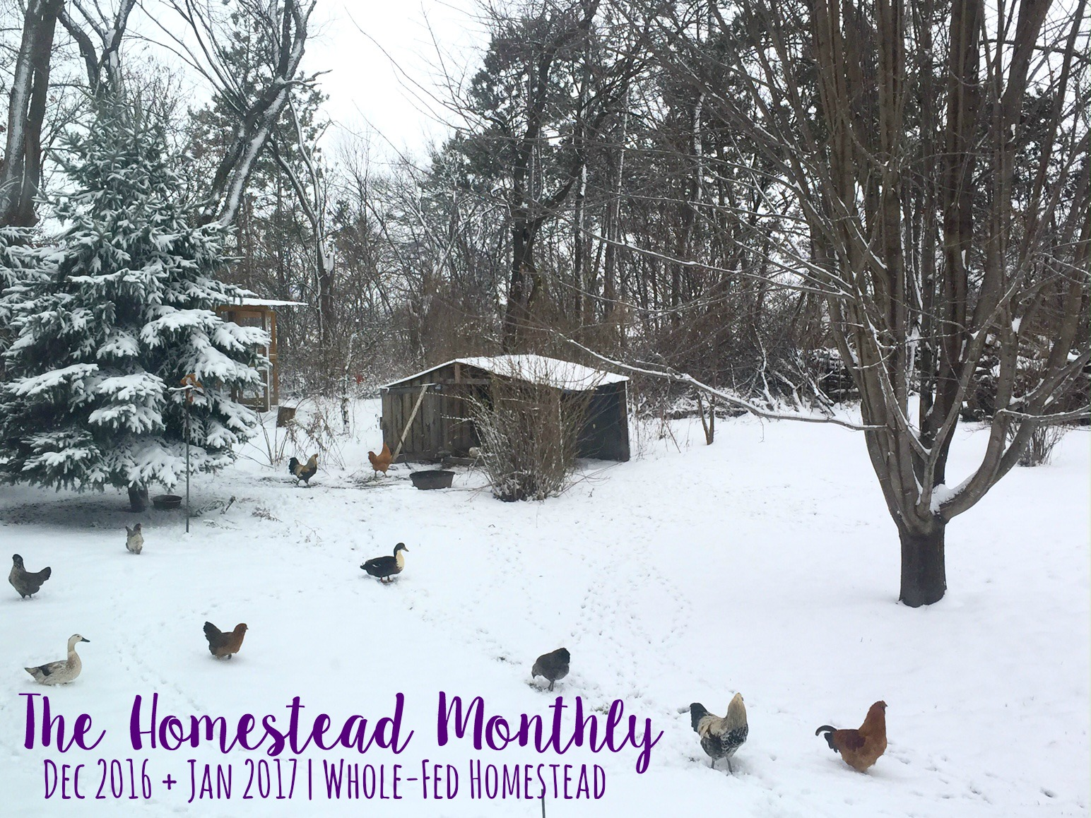 Homestead Monthly: December + January {natural beauty, fame, and fresh eggs}