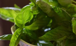 New way to preserve fresh basil