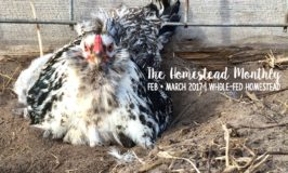 Homestead Monthly: Feb + March {maple syrup, apple pruning, and homestead expansion}