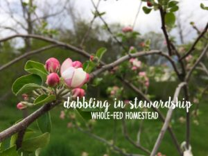 Dabbling in stewardship Whole-fed homestead