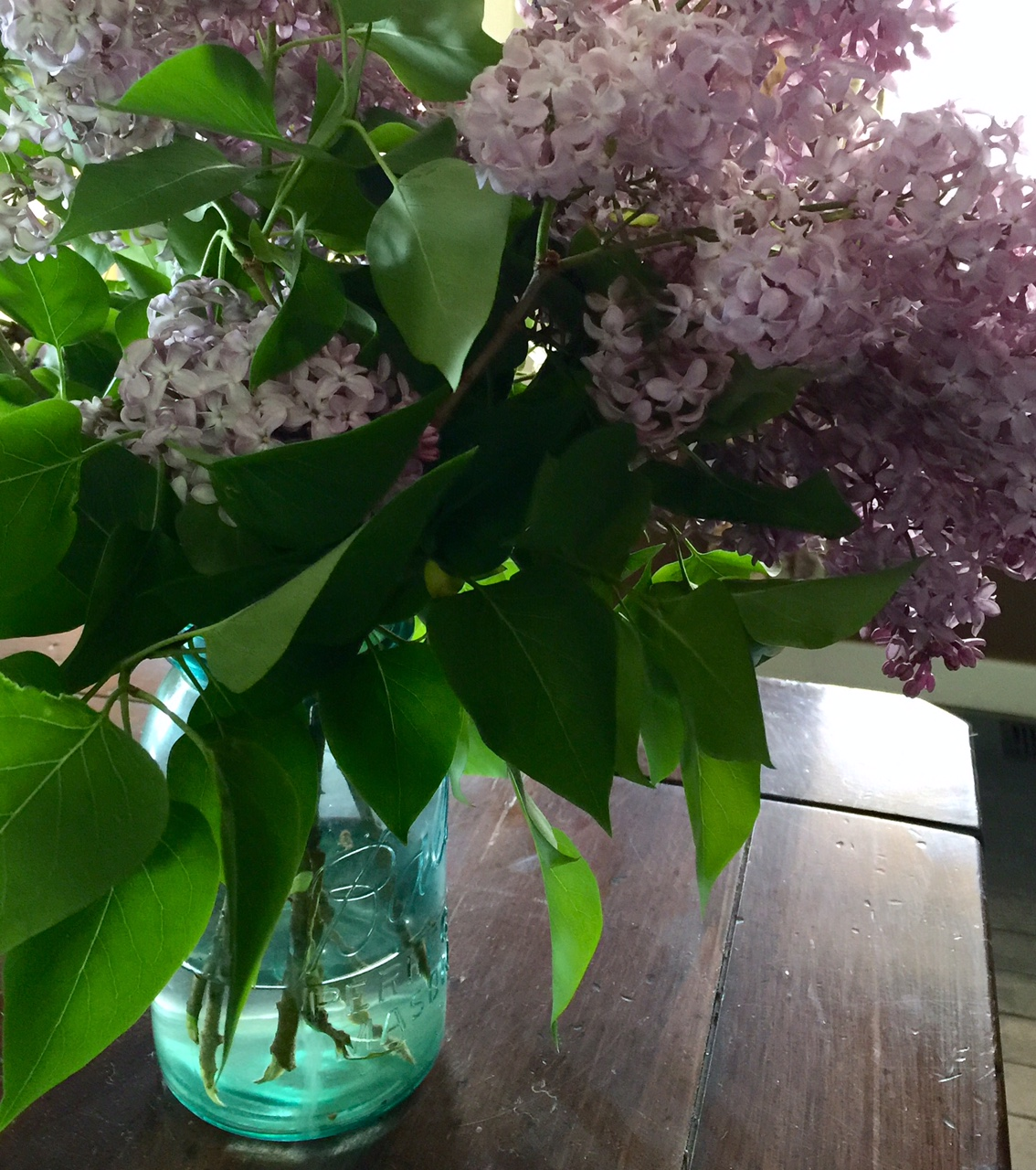 Lilacs in antique mason jar