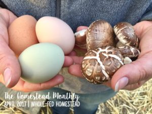 Homestead Monthly: April {orcharding, raised beds, and fungus}