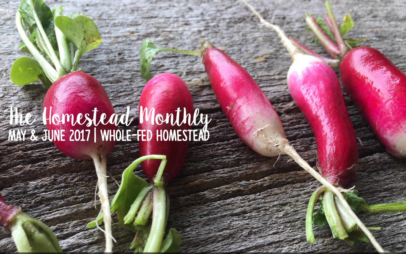 Homestead Monthly: May & June {sow, weed, nurture, and reap}