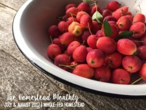 Homestead Monthly: July & August {harvesting, preserving, and loss}