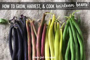 How to Grow, Harvest & Cook Heirloom Beans + My Favorite Snap & Dried Bean Varieties!